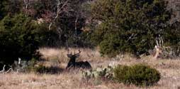 2006 YO Ranch - Deer Photos 2