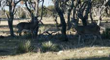 2006 YO Ranch - Deer Photos 7