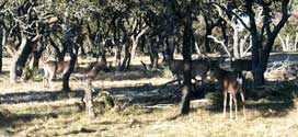 2006 YO Ranch - Deer Photos 8