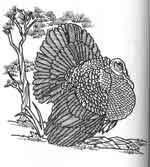 Turkey Drawing by Lora S. Irish